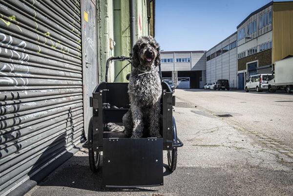 El-ladcykel med hund